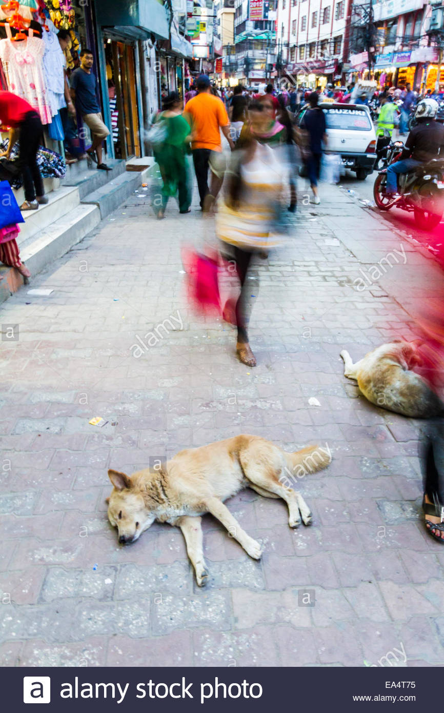 People shopping on street and dogs sleeping on pavement - Nepal - Stock Image