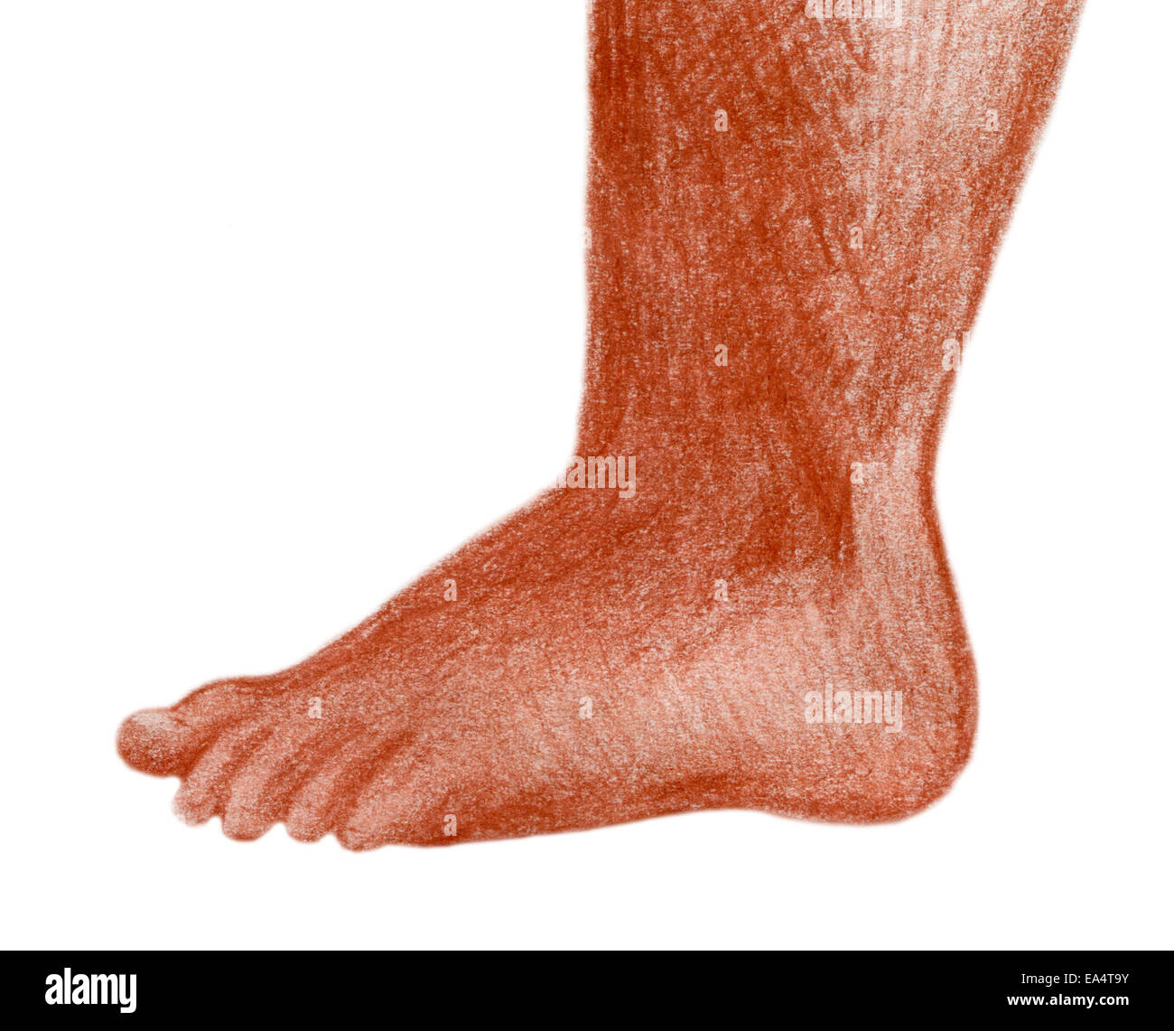 Toddler foot, original red chalk sketch of a chubby toddler foot, isolated on white. - Stock Image