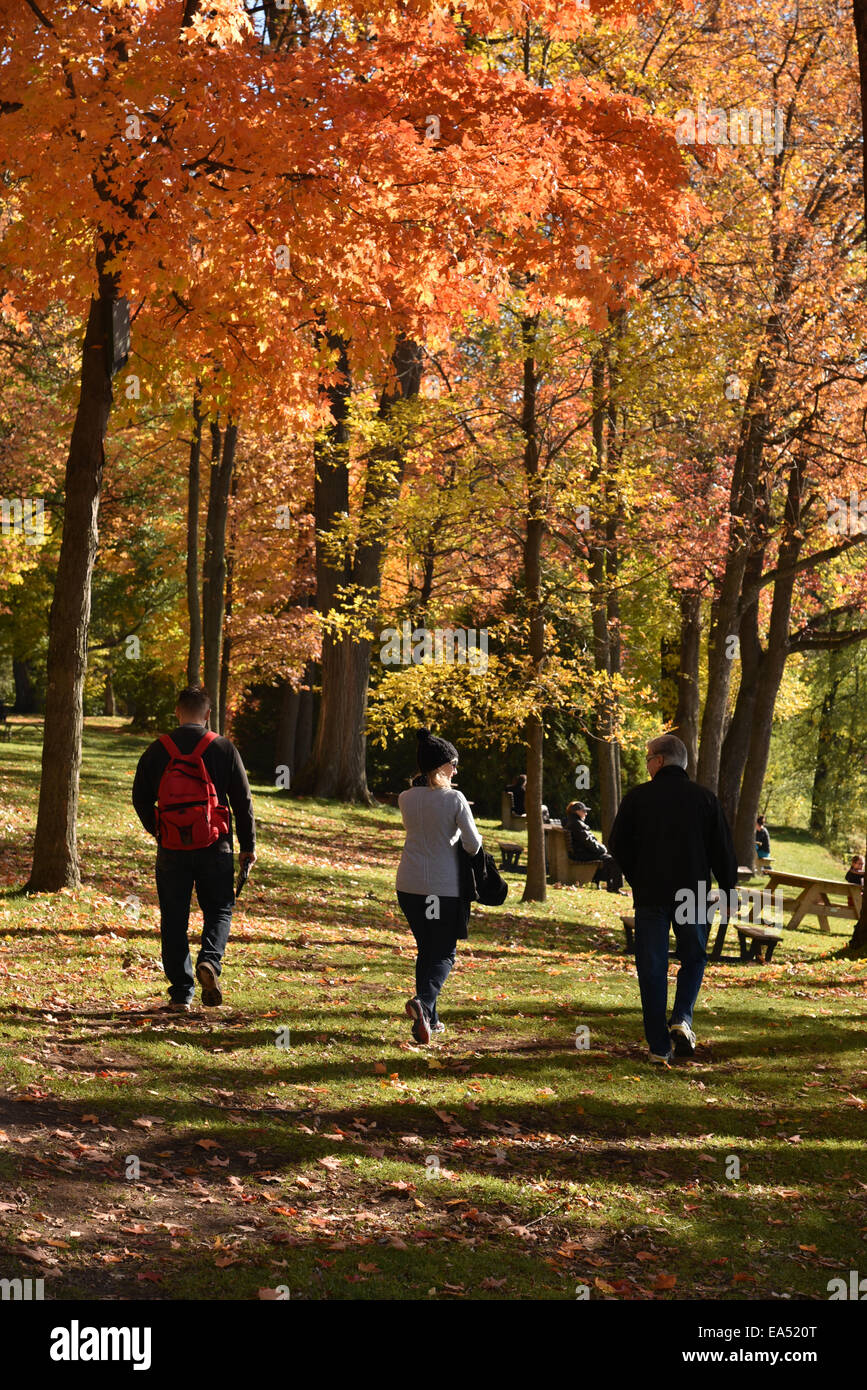 Three people walking surrounded by autumn trees - Stock Image