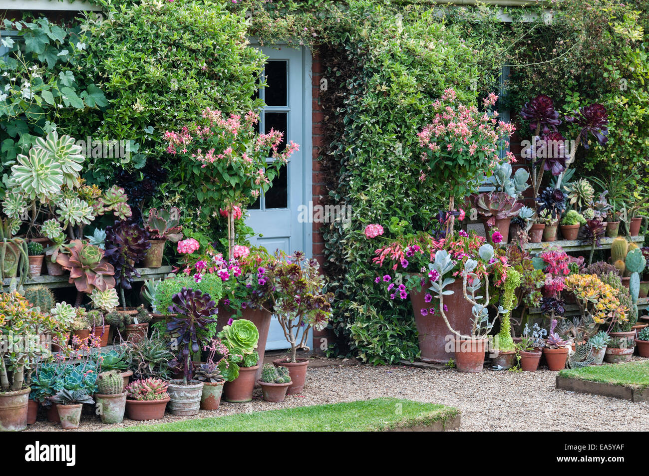East Ruston Old Vicarage gardens, Norwich, Norfolk, UK. The Walled Garden - Stock Image