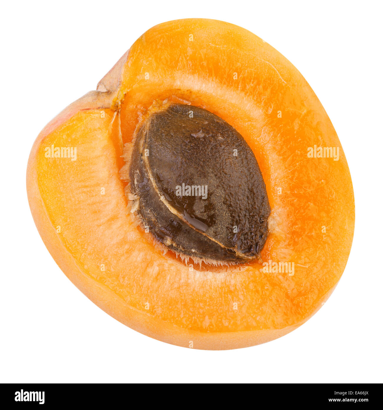 Half of a Apricot with fruit core - Stock Image