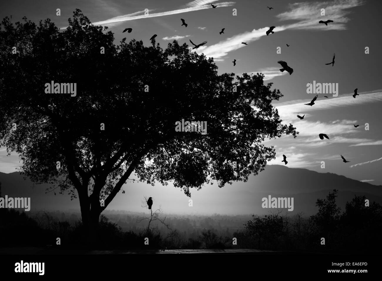 Silhouetted birds and tree - Stock Image