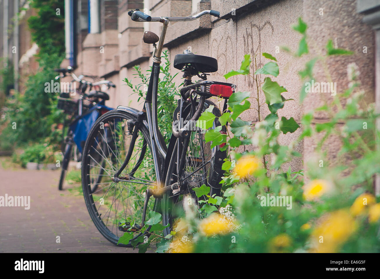 Netherlands, Amsterdam, View of parked bikes - Stock Image