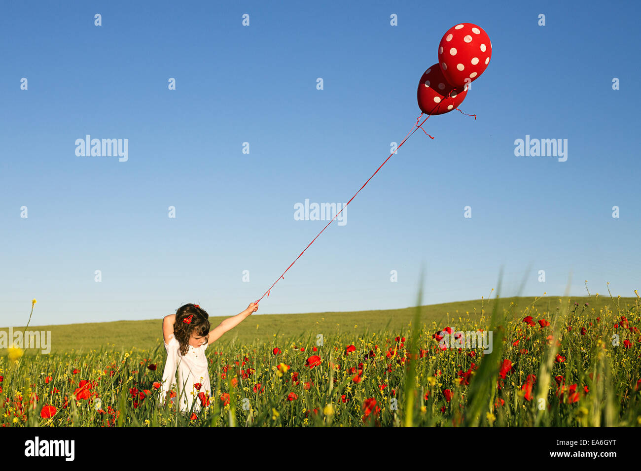 Girl standing in a field of poppy flowers holding polka dot balloons - Stock Image