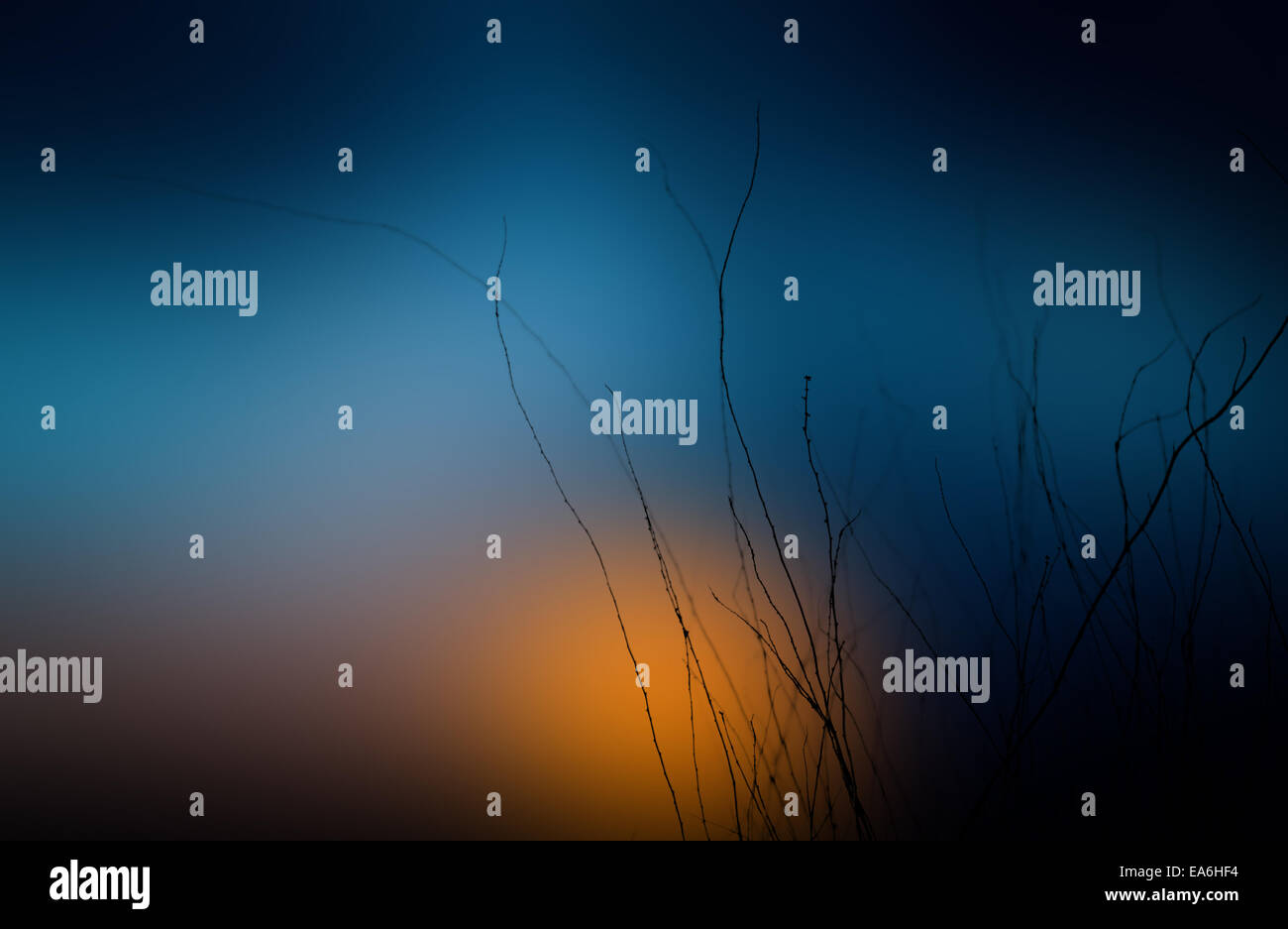 Silhouette of twigs at sunset - Stock Image