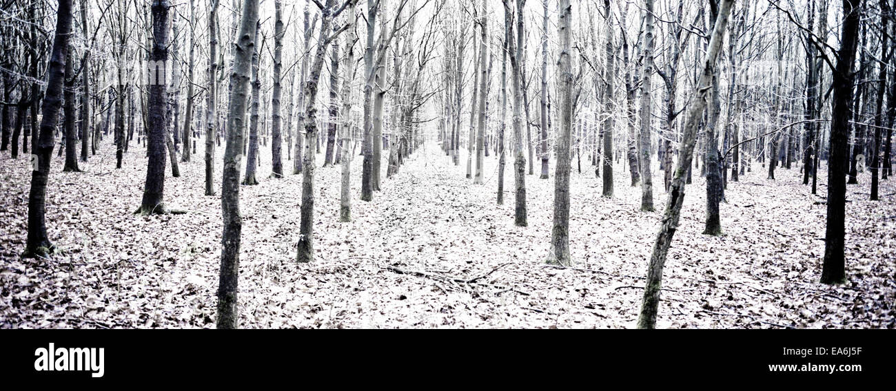 Winter forest in the snow Stock Photo