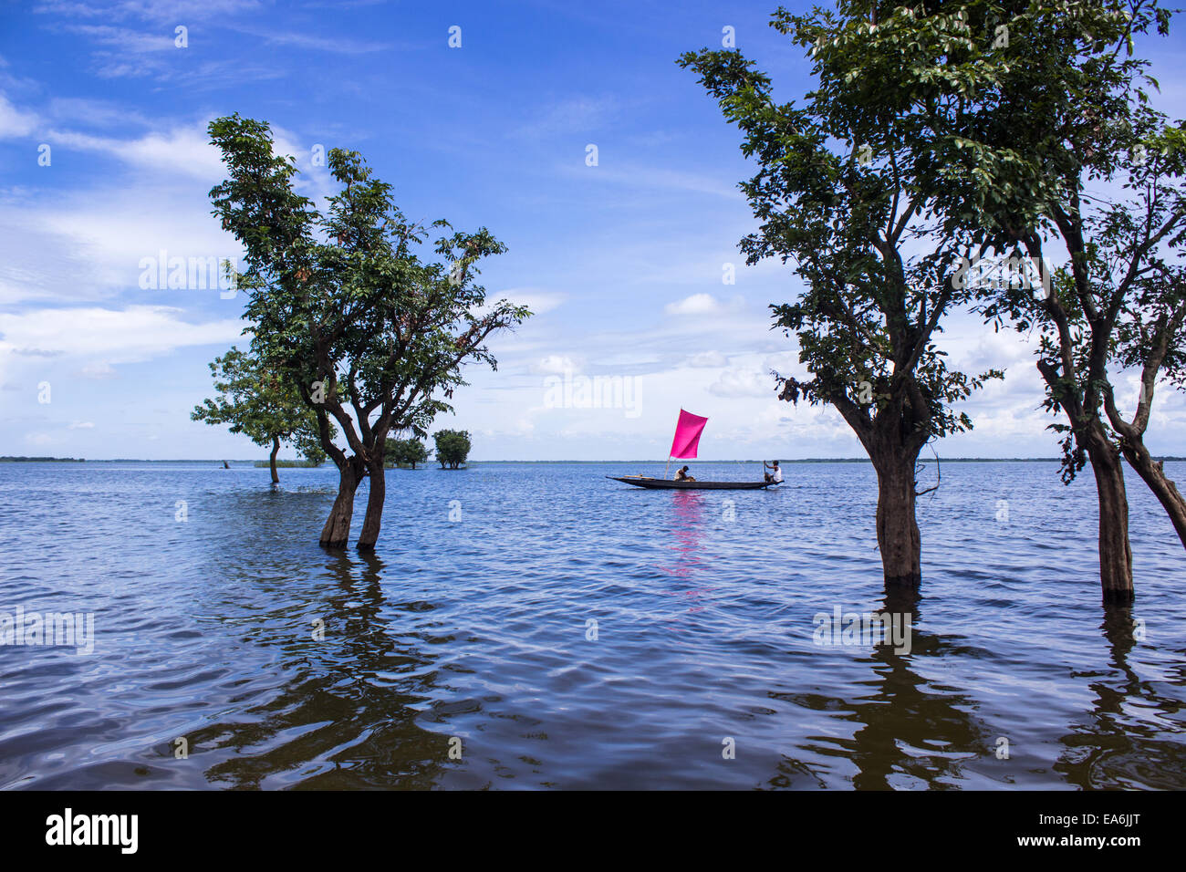 Bangladesh, Sunamganj, Boat floating on water among flooded trees - Stock Image