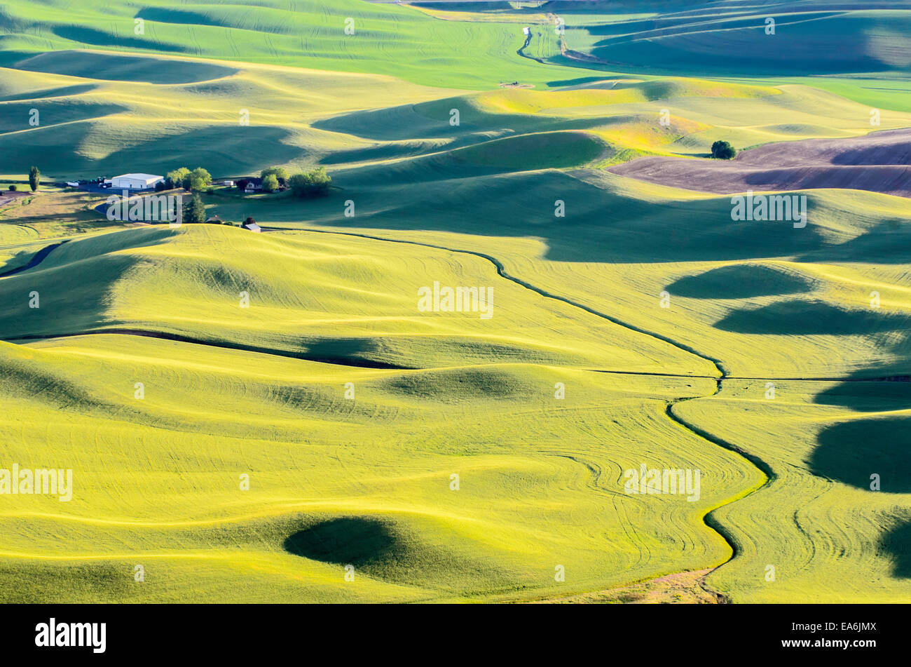 Rural landscape at sunset, Palouse, Washington, America, USA - Stock Image