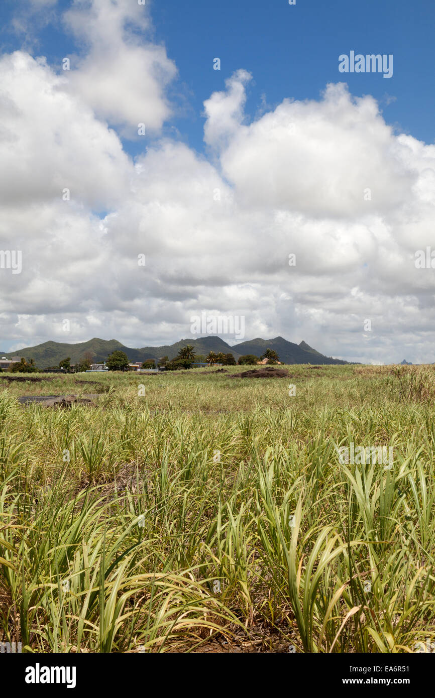 Mauritian landscape with sugar cane field, Mauritius - Stock Image