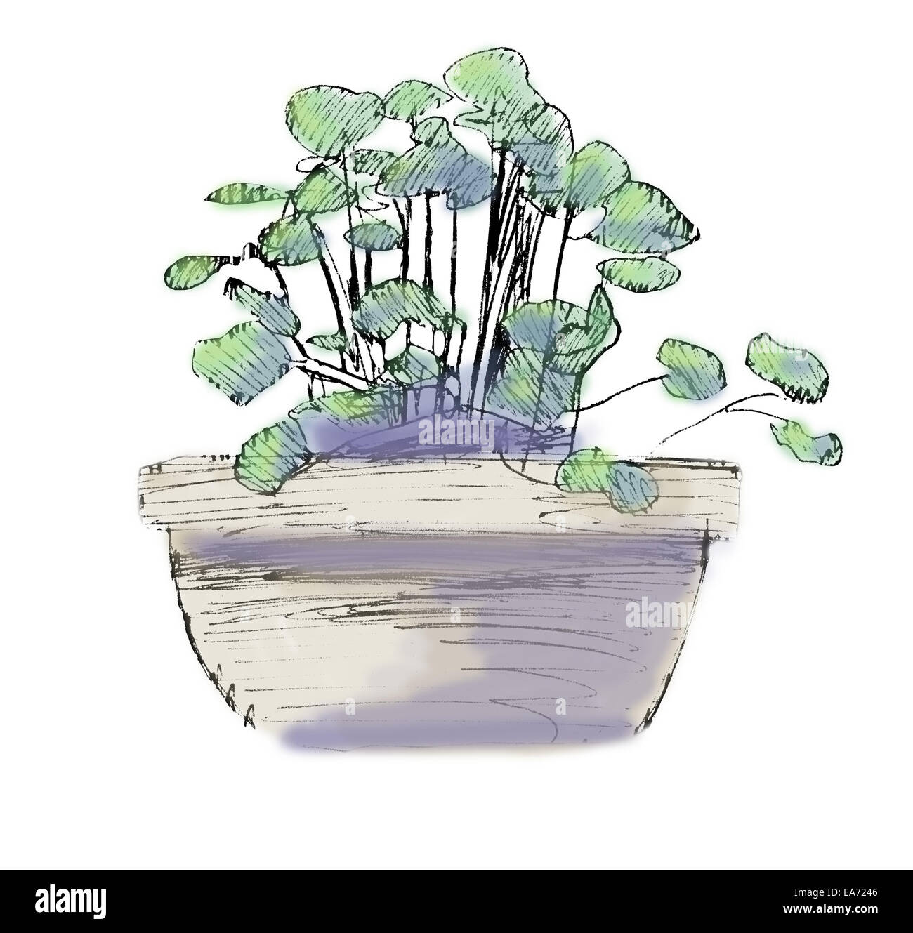 Flower pot, black and white ink sketch, colorized. Stock Photo
