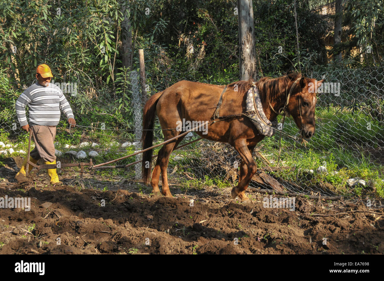 A Turkish farm worker tills a small plot of land with a plough pulled by a horse, at the Pastoral Vadi ecotourism - Stock Image