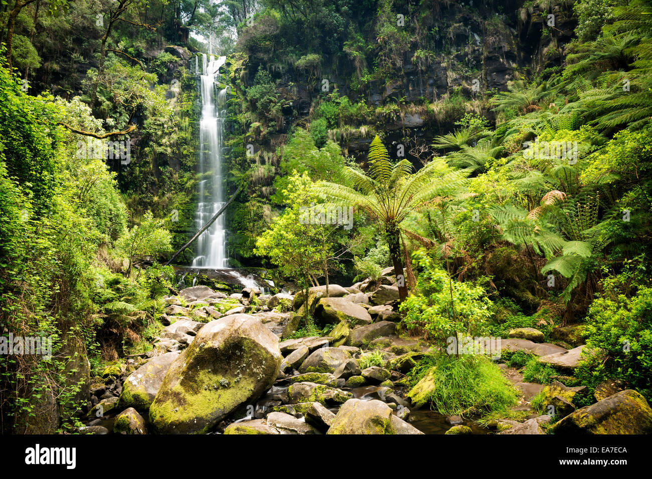 Erskine Falls waterfall in the Otways National Park along the Great Ocean Road, Australia - Stock Image