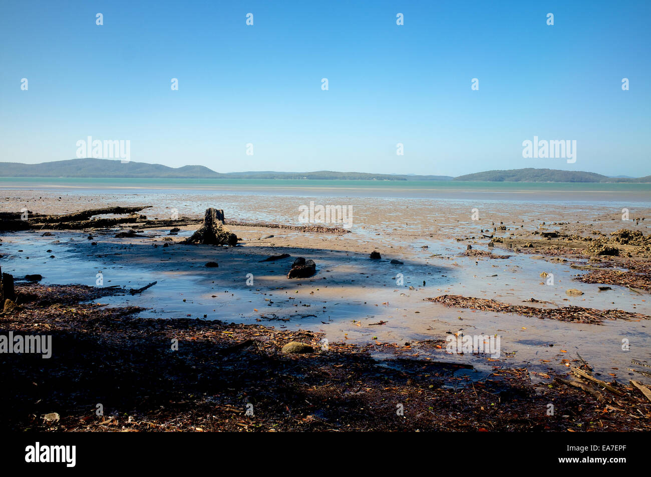 Port Stephens, tide out - Stock Image