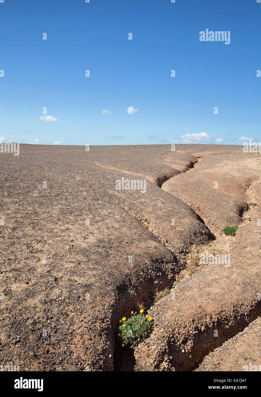 Erosion gully with blooming plant - Stock Image
