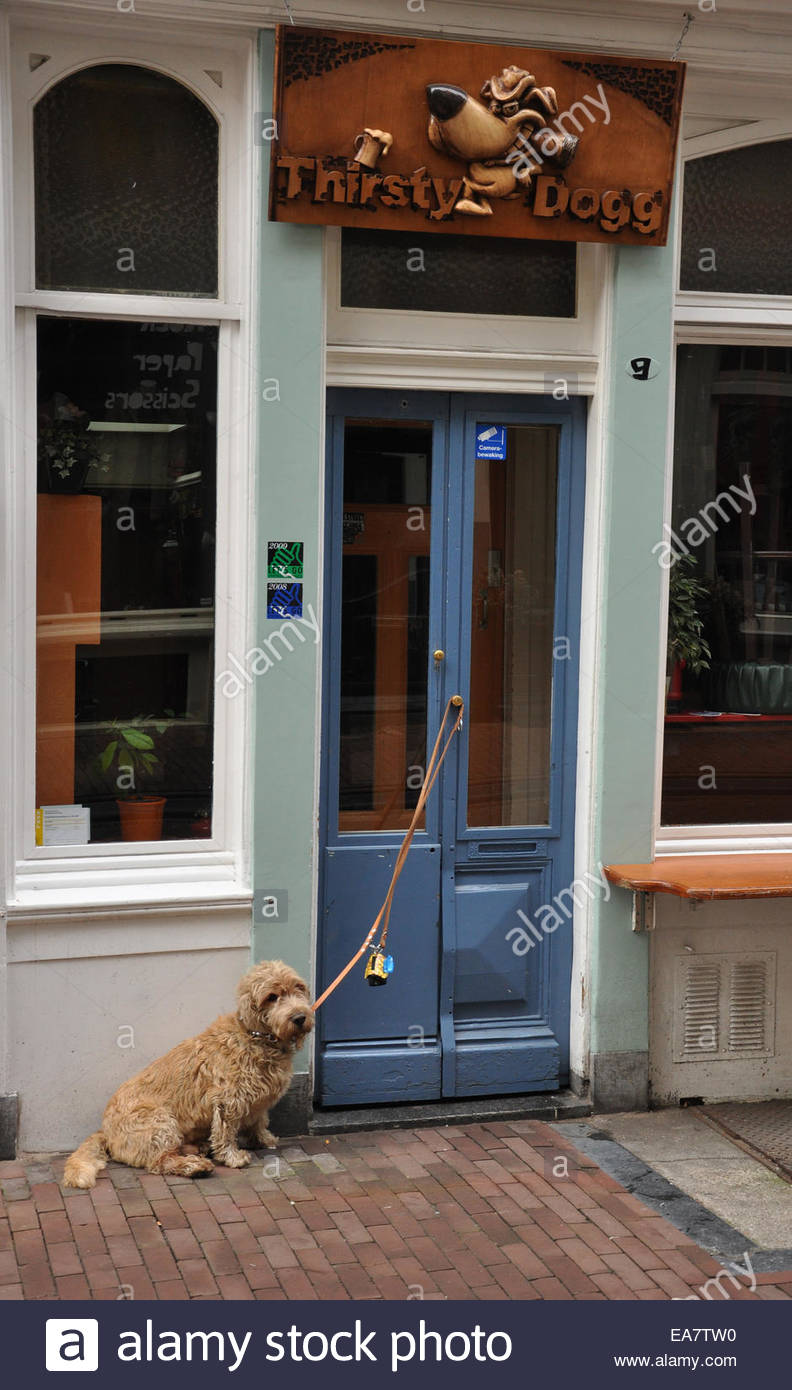 A dog tied up outside the Thirsty Dog Cafe Bar in Amsterdam, The Netherlands. - Stock Image