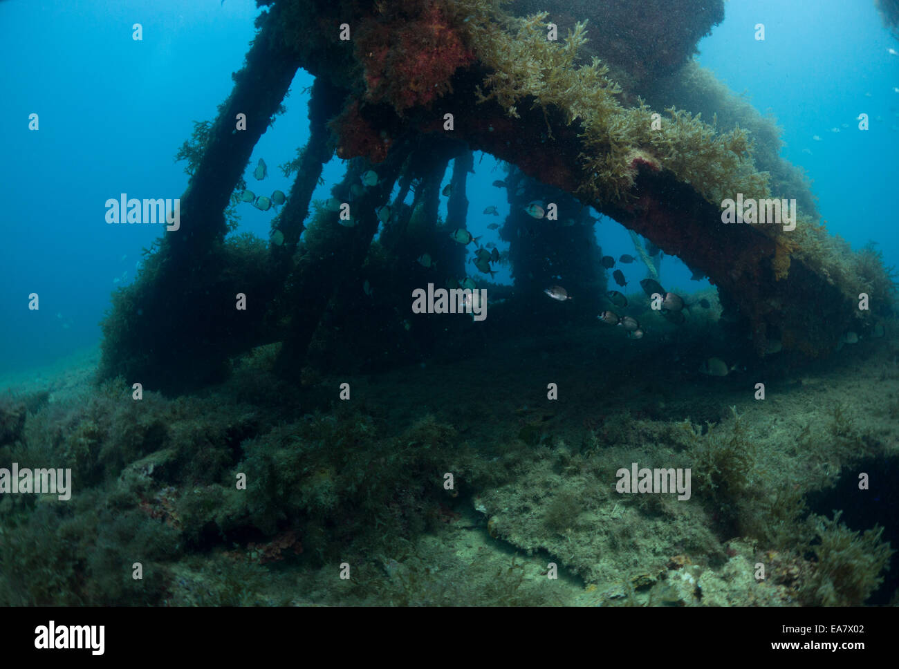 Photograph of the HMS Maori wreck outside Grand Harbor in Valletta, Malta, Mediterranean Sea. Stock Photo