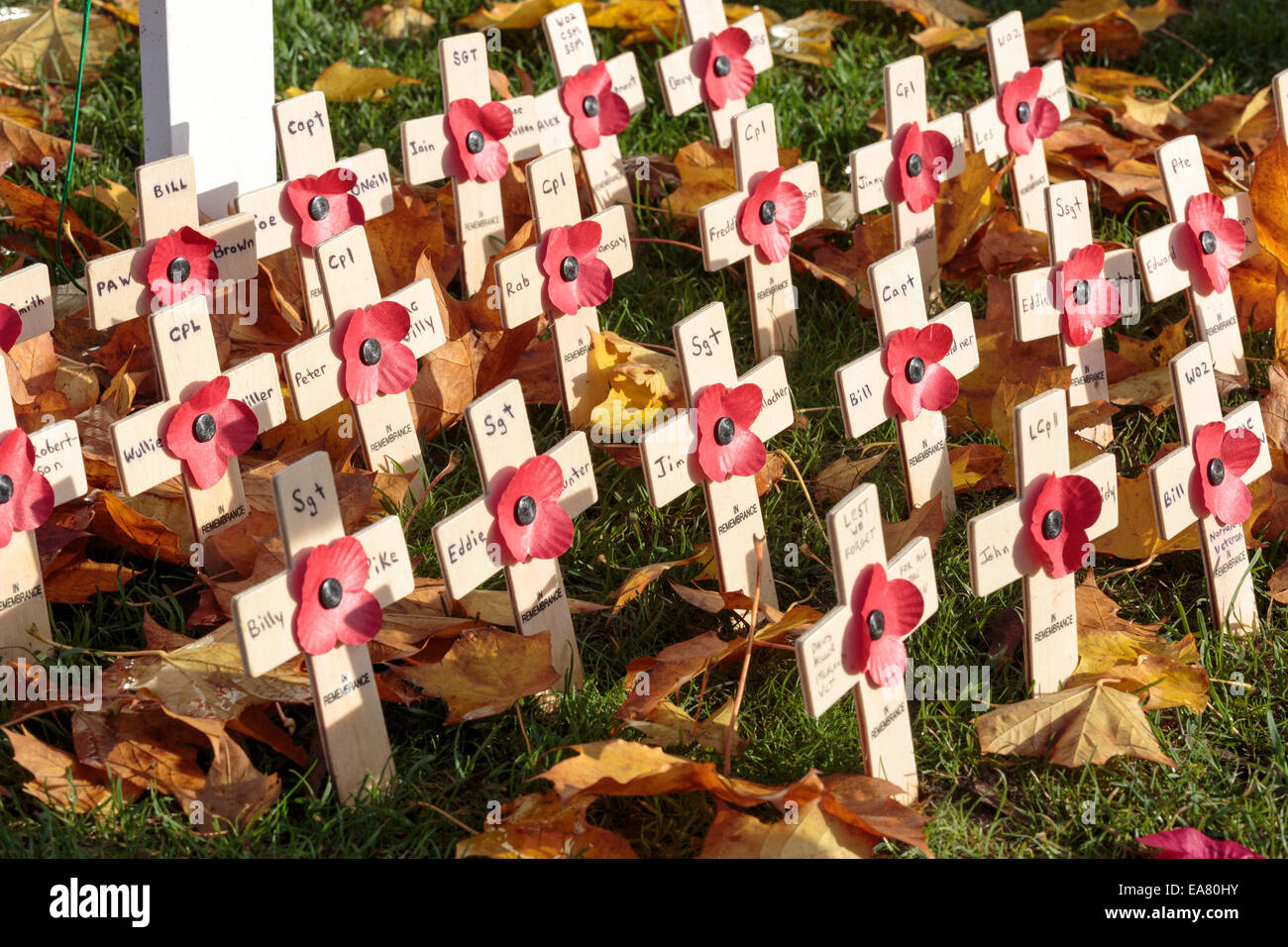 Remembrance day crosses and poppies, George Square memorial garden, Glasgow, Scotland, UK - Stock Image