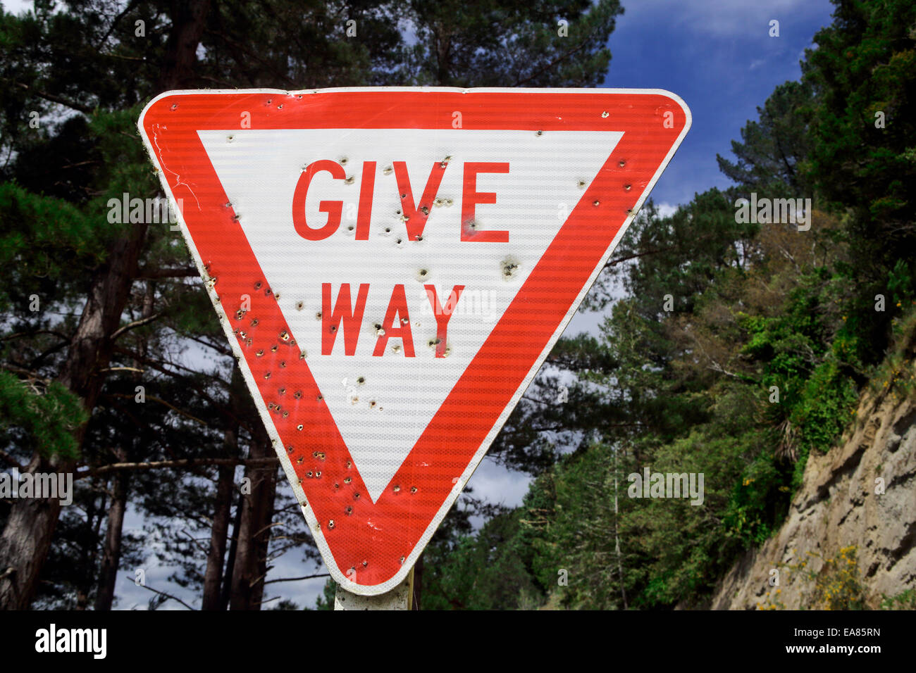 Give way road sign full of bullet holes - Stock Image