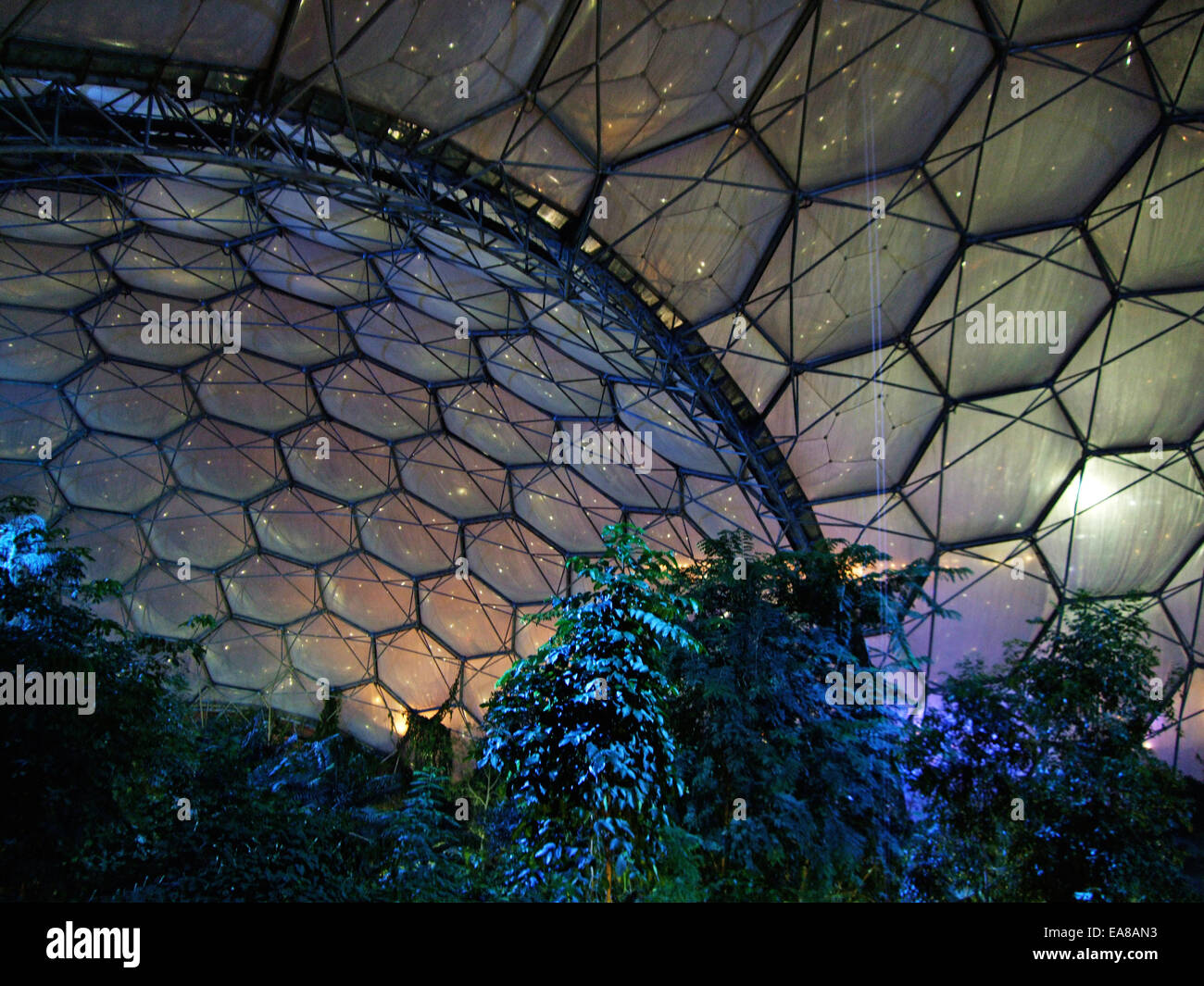 Inside The Flood Lit Humid Tropics Biome At Eden Project Christmas Time Night