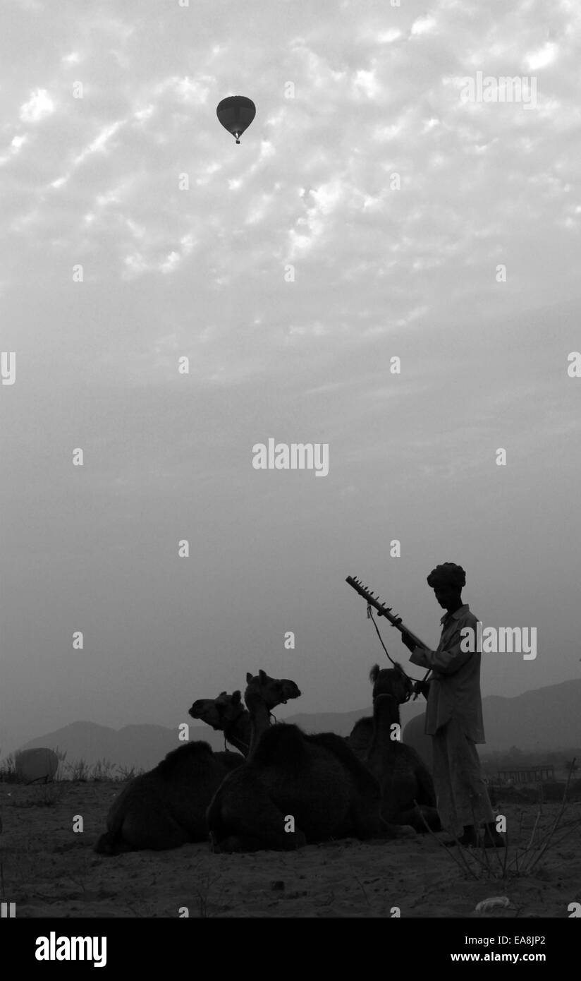 three camels, sitting, one man, playing, musical, instrument, hot air balloon in Pushkar, Rajasthan, India. Stock Photo