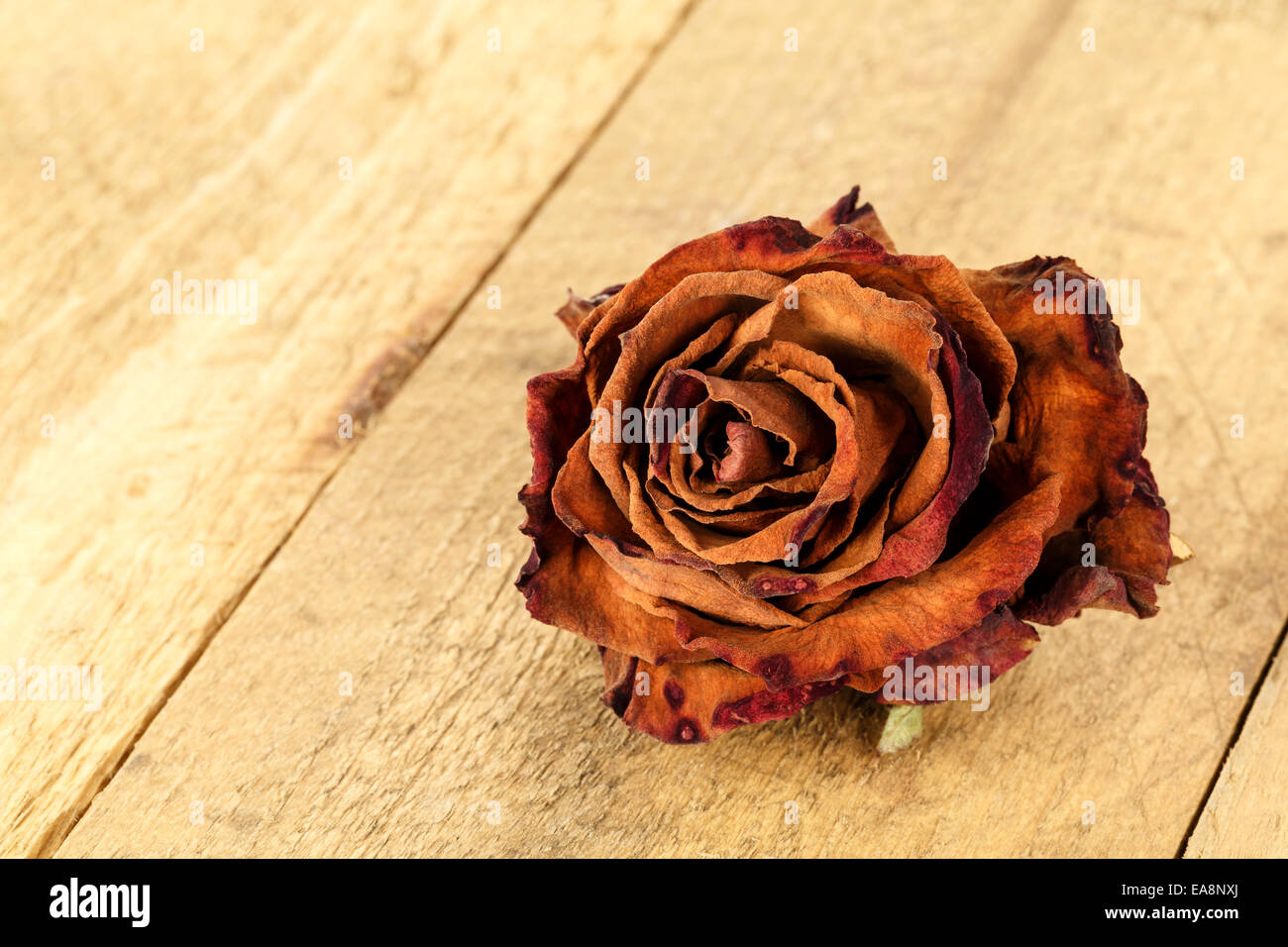 Dried flower of rose - Stock Image