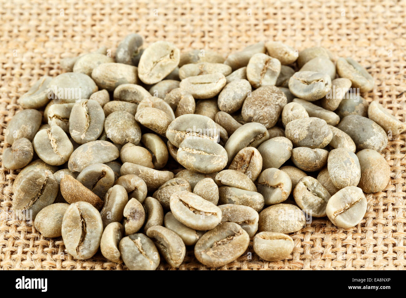 Green coffee beans shown on the canvas - Stock Image