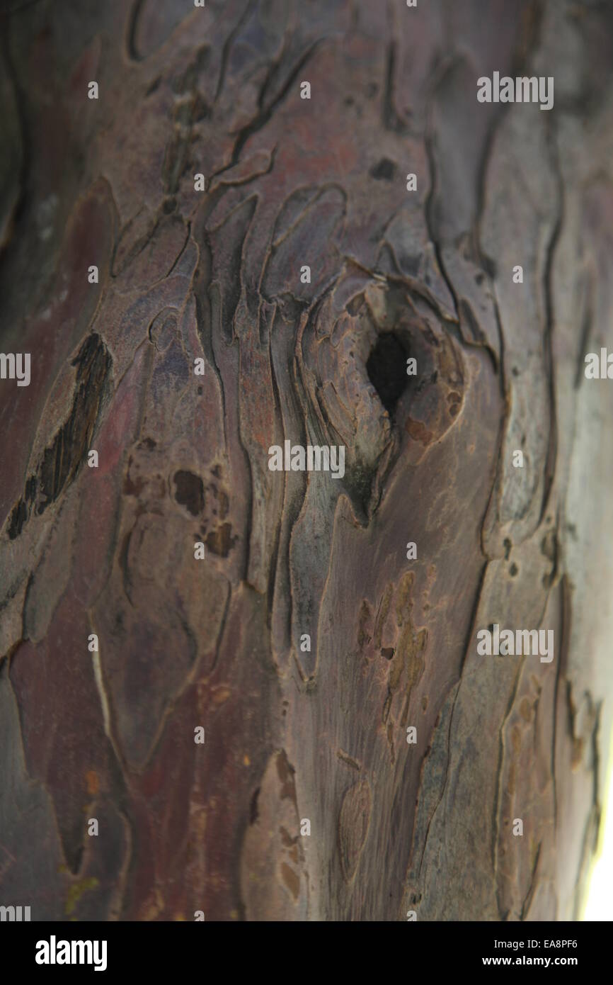 Abstract wood background - Stock Image