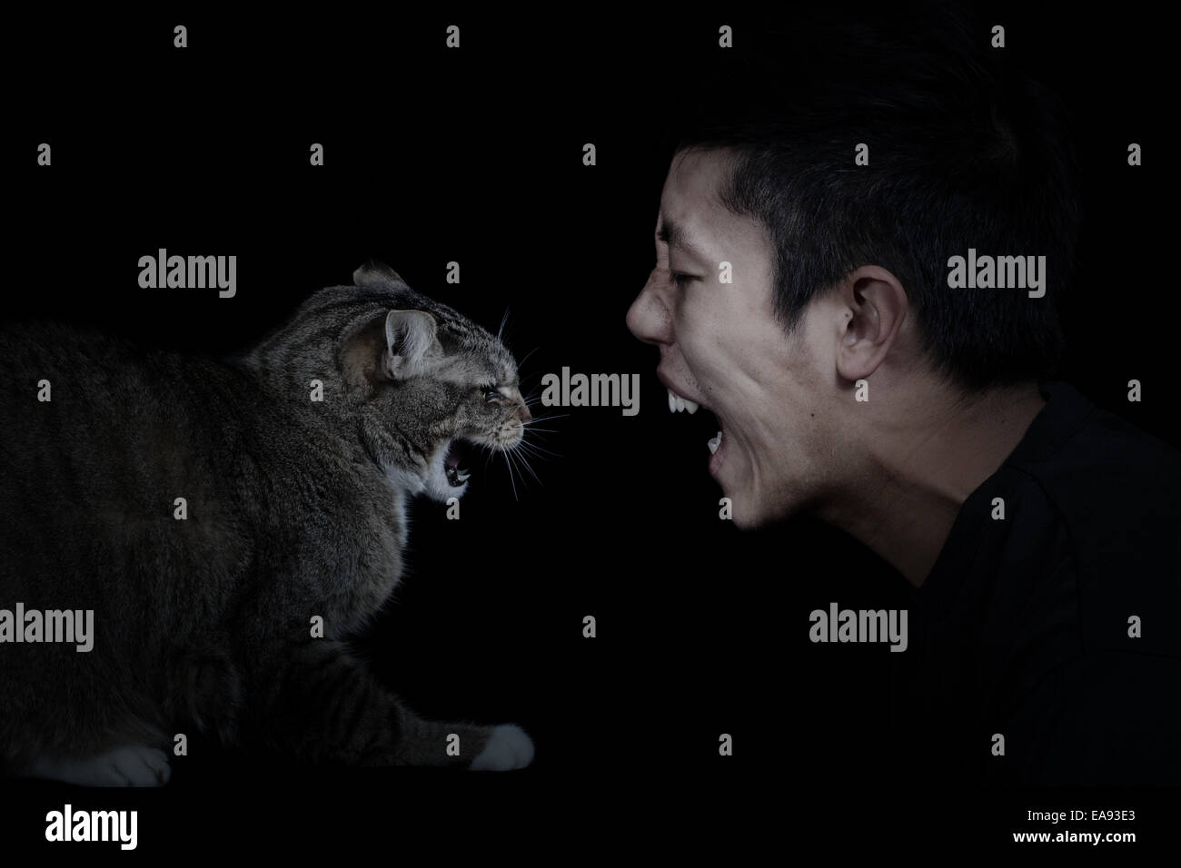 Close up of a Cat and Man showing anger towards each other on black background with light on faces - Stock Image
