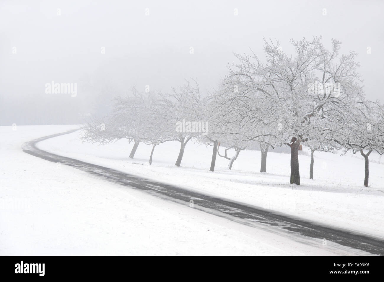Snowy fruit trees with fog at Engenhahn in the Taunus, Hesse, Germany - Stock Image