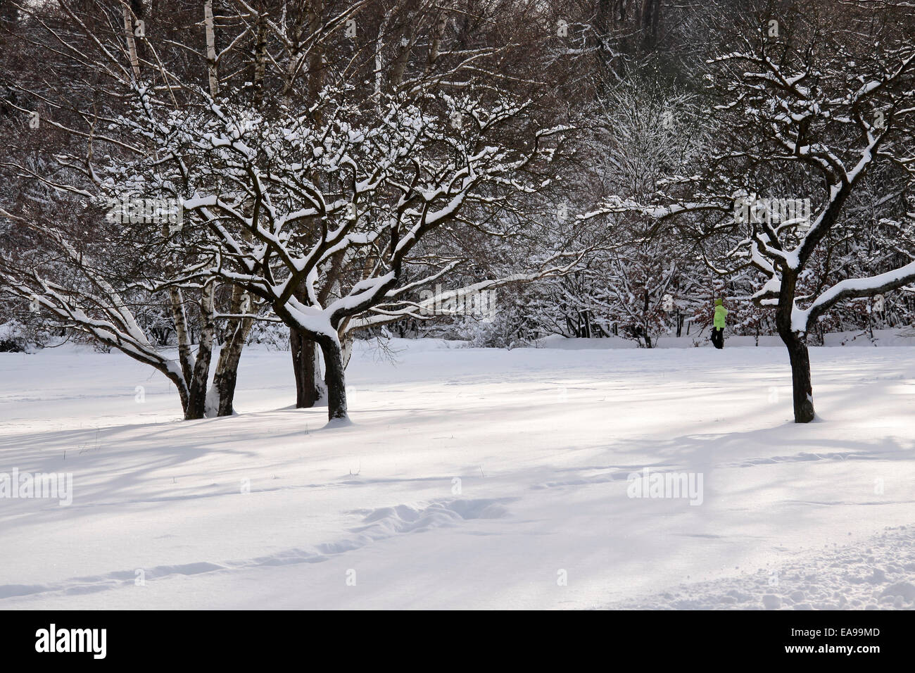Snowy fruit trees at Engenhahn in the Taunus, Hesse, Germany - Stock Image