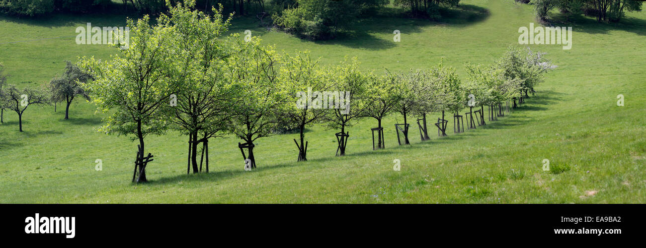 Number of fruit trees in the Taunus mountain, Engenhahn, Hesse, Germany - Stock Image