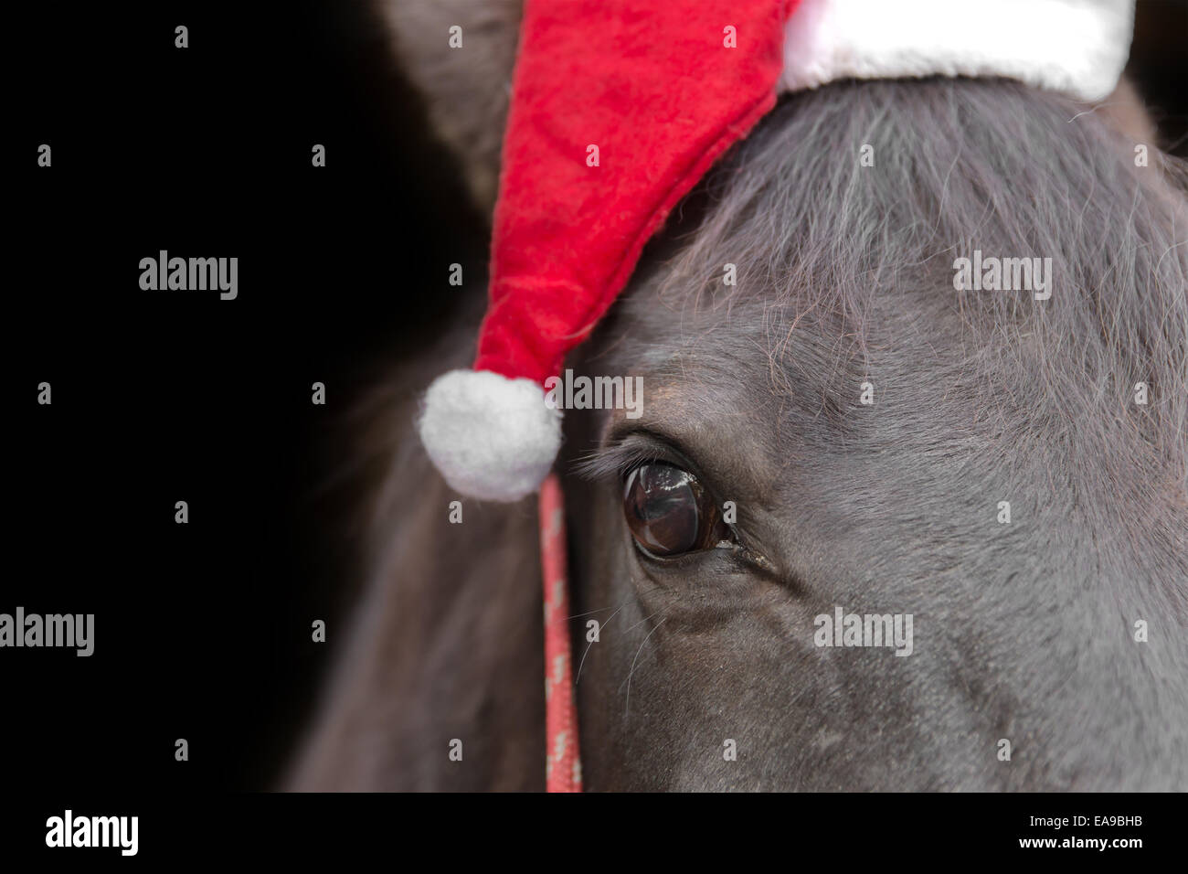 Christmas Horse High Resolution Stock Photography And Images Alamy