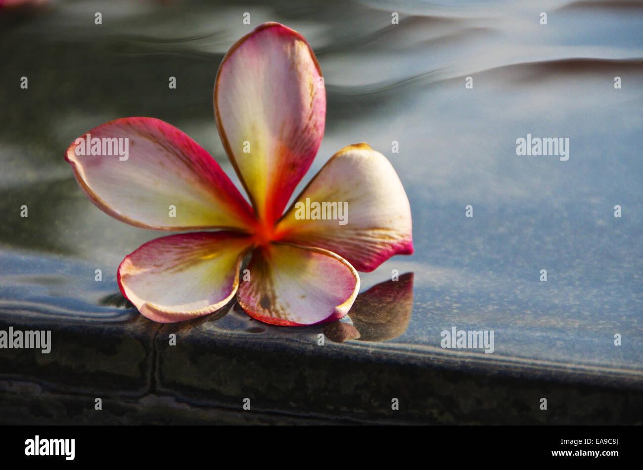 Fading Flower - Stock Image