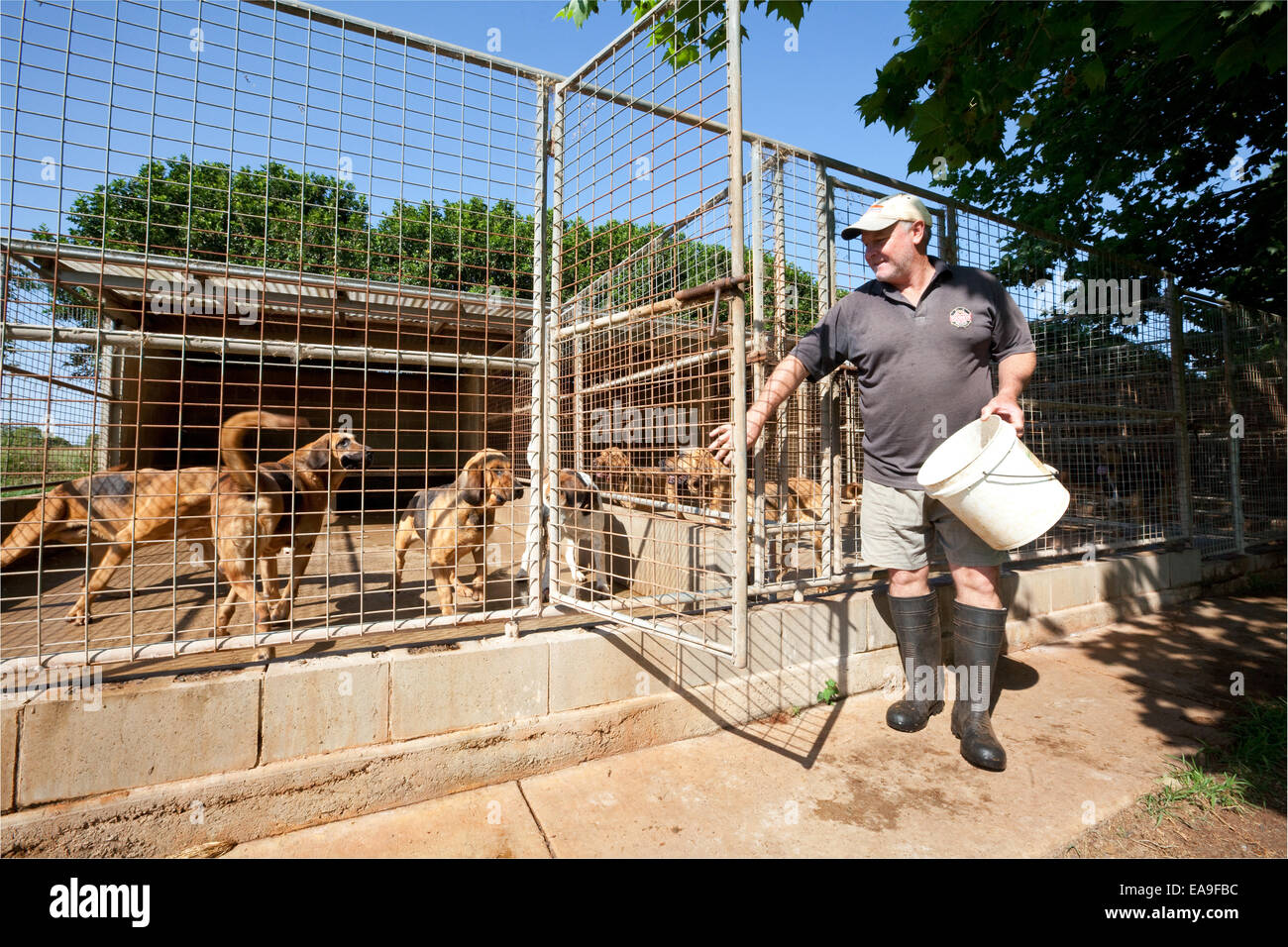 Summerland Serums - Steve Murray feeds the dogs - Stock Image