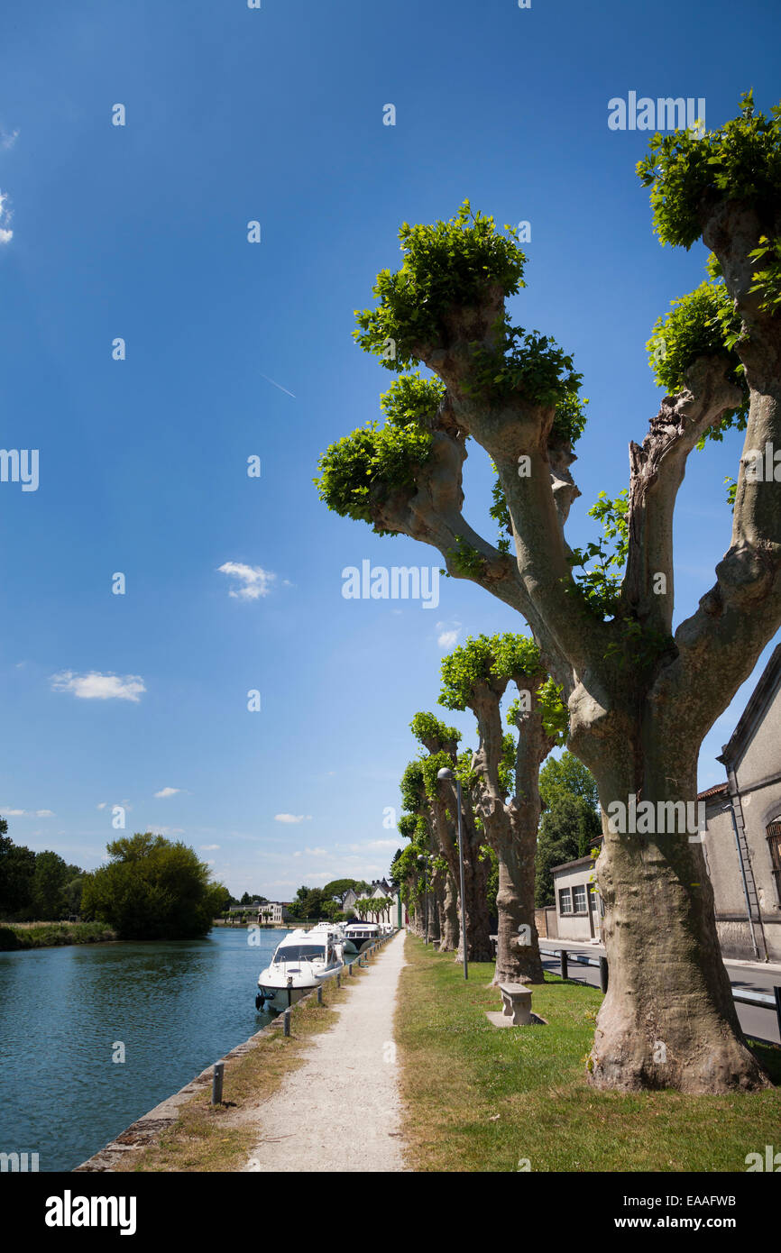 The River Charente at Jarnac with towpath and pollarded trees by the Quai de l'orangerie - Stock Image