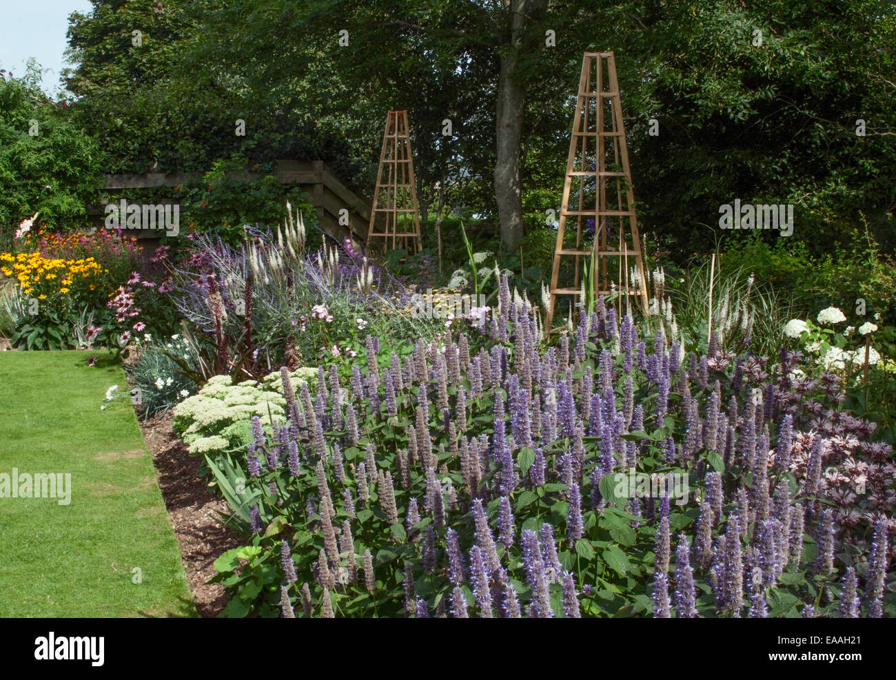 New herbaceous border at Pecorama Gardens, Beer, Devon with Echinacea 'Magnus' and Agastache foeniculum, - Stock Image