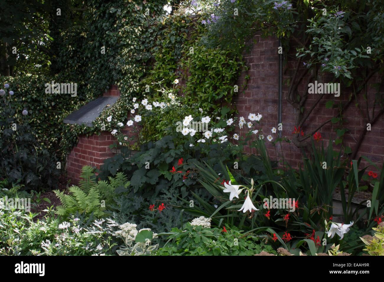 Pecorama Gardens, Beer, Devon. Mixed planting containing ferns, Anemone, Solanum crispum 'Glasnevin', Crinum powellii and Crocos Stock Photo