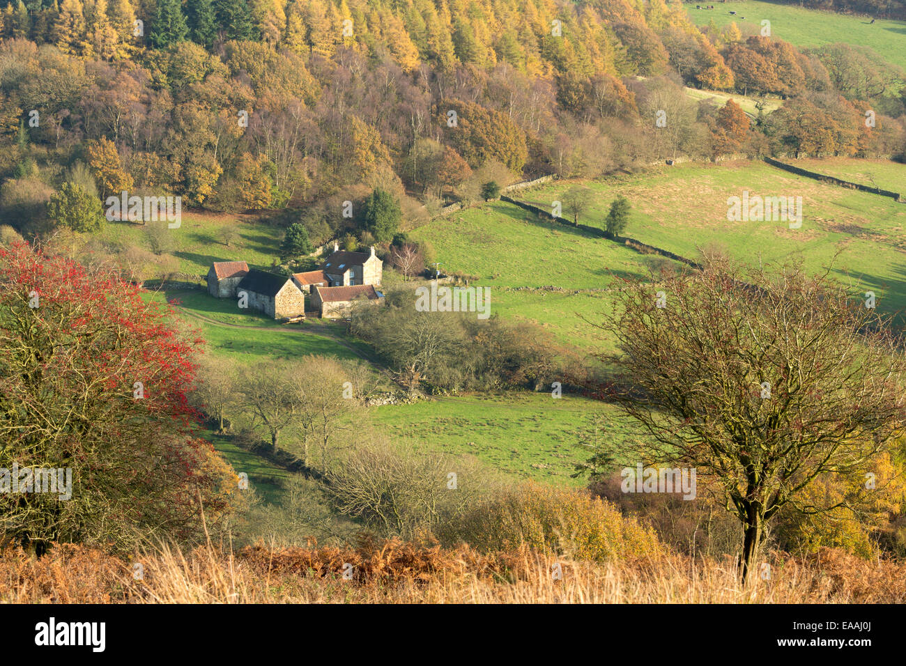 An isolated farm in Farndale on the North Yorkshire moors in autumn. - Stock Image