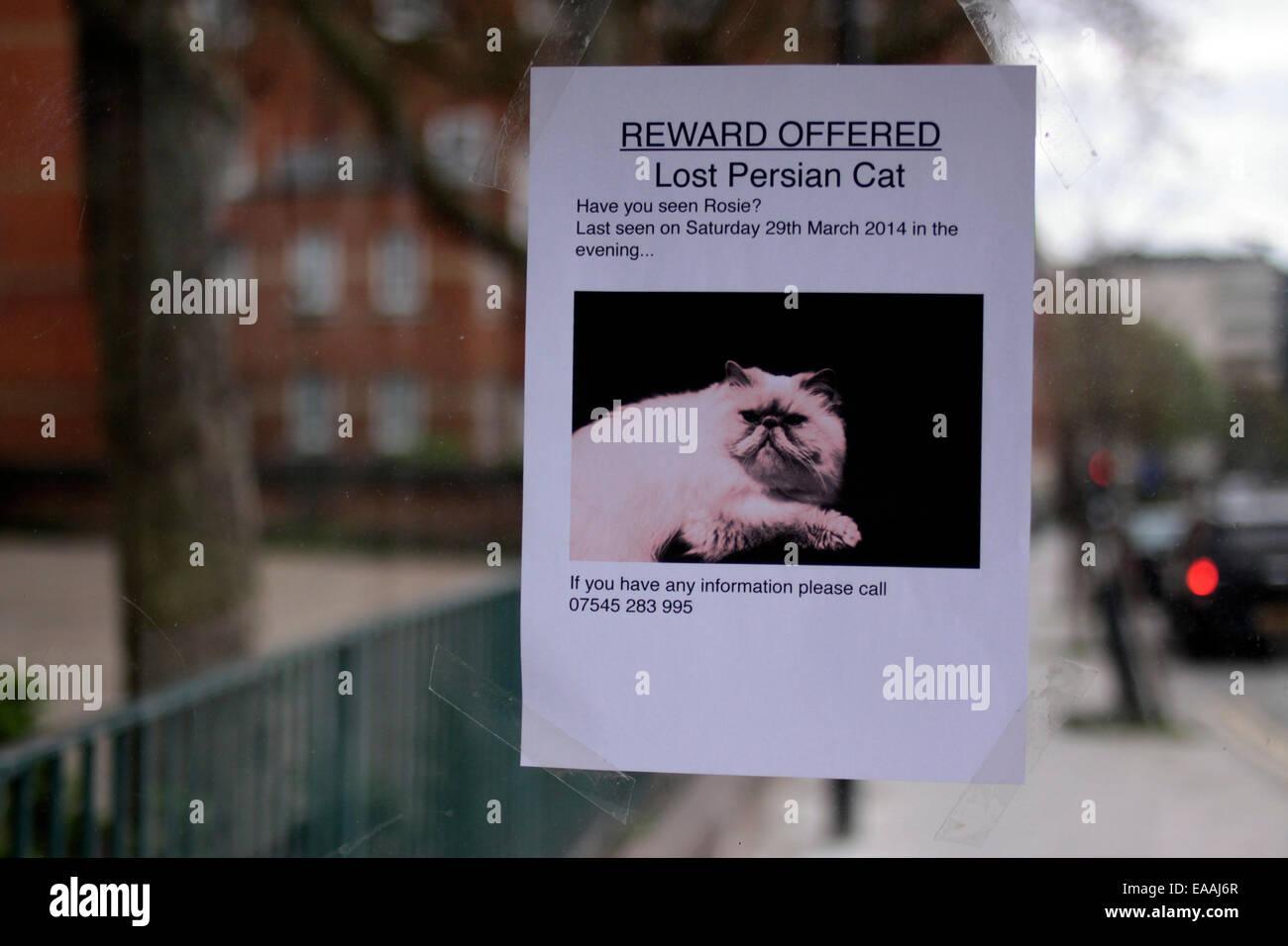 lost cat reward poster stock photos lost cat reward poster stock