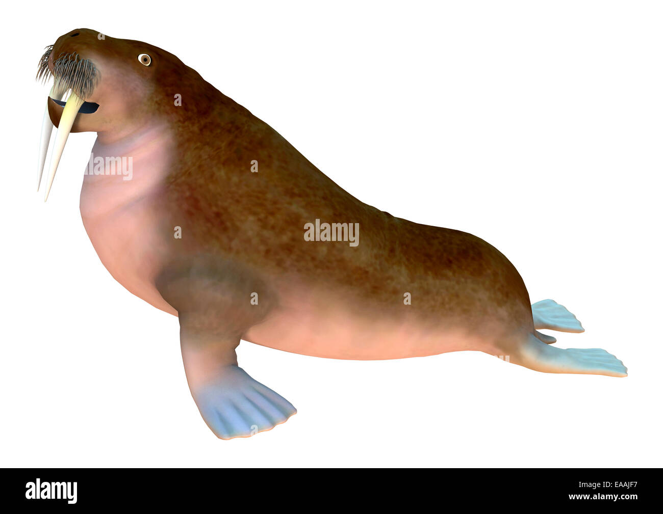 Marine Mammal Cut Out Stock Images Pictures Alamy