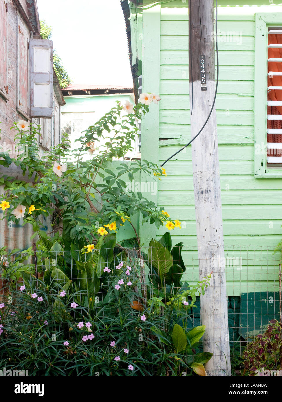 detail of tropical houses and plants in the  Carribbean - Stock Image