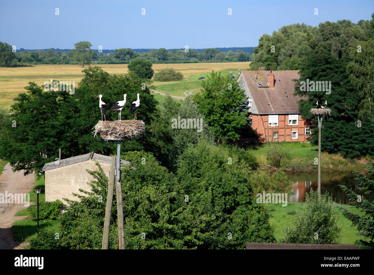 Stork nests in Werben / Elbe, Altmark, Sachsen-Anhalt, Germany, Europe Stock Photo