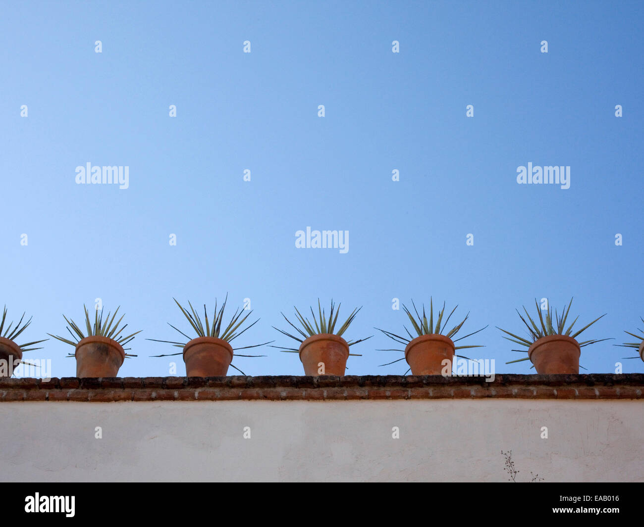 Agave plants In roof top Garden - Stock Image