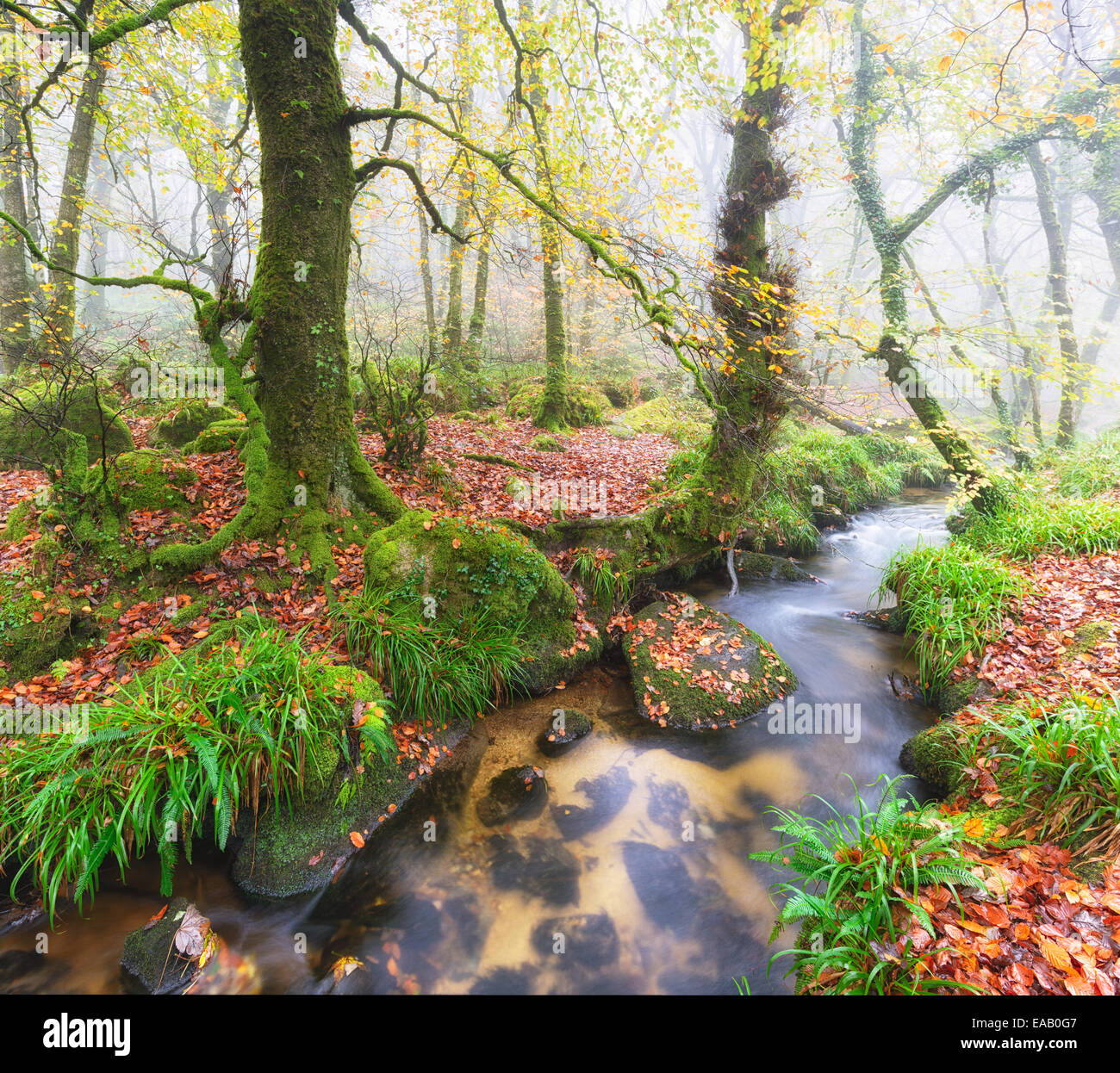 Foggy woodland stream at Golitha Falls in Cornwall - Stock Image
