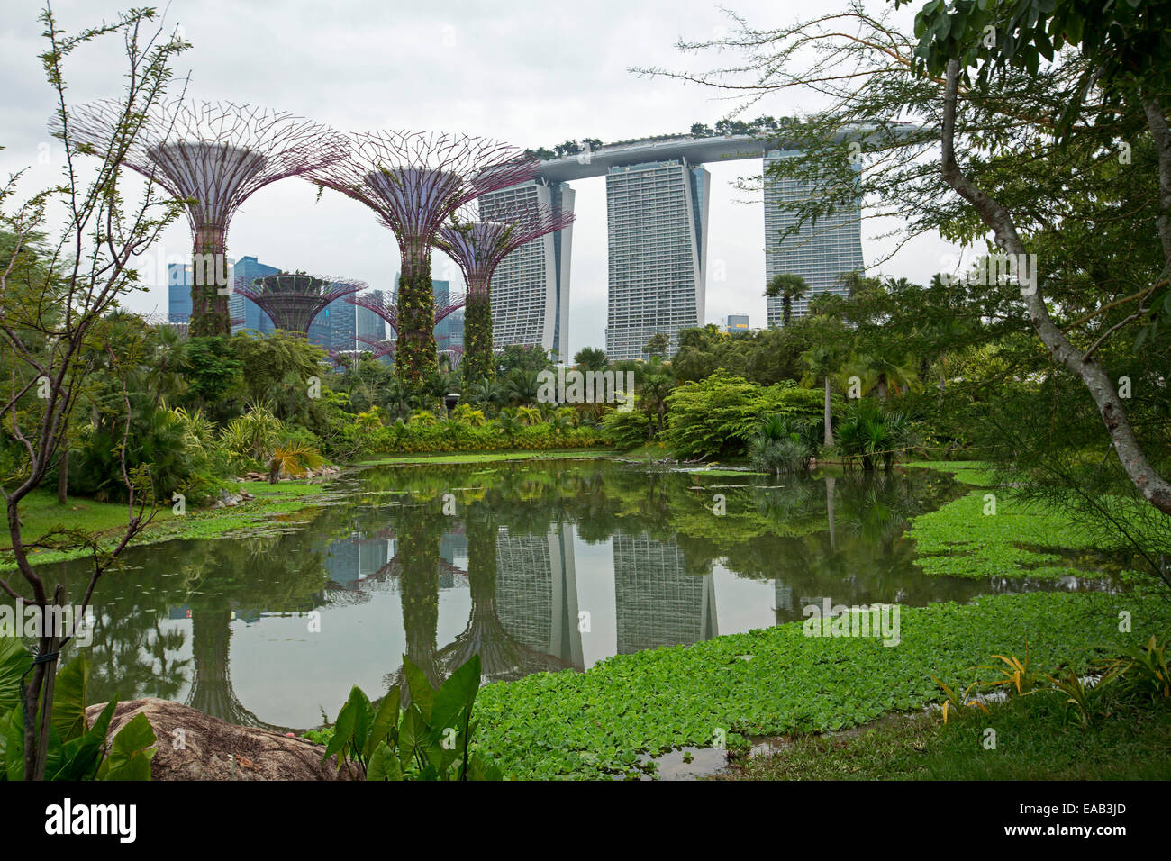 Marina Bay Sands casino resort / hotel, rising beside artificial trees of Gardens By The Bay & reflected in calm Stock Photo