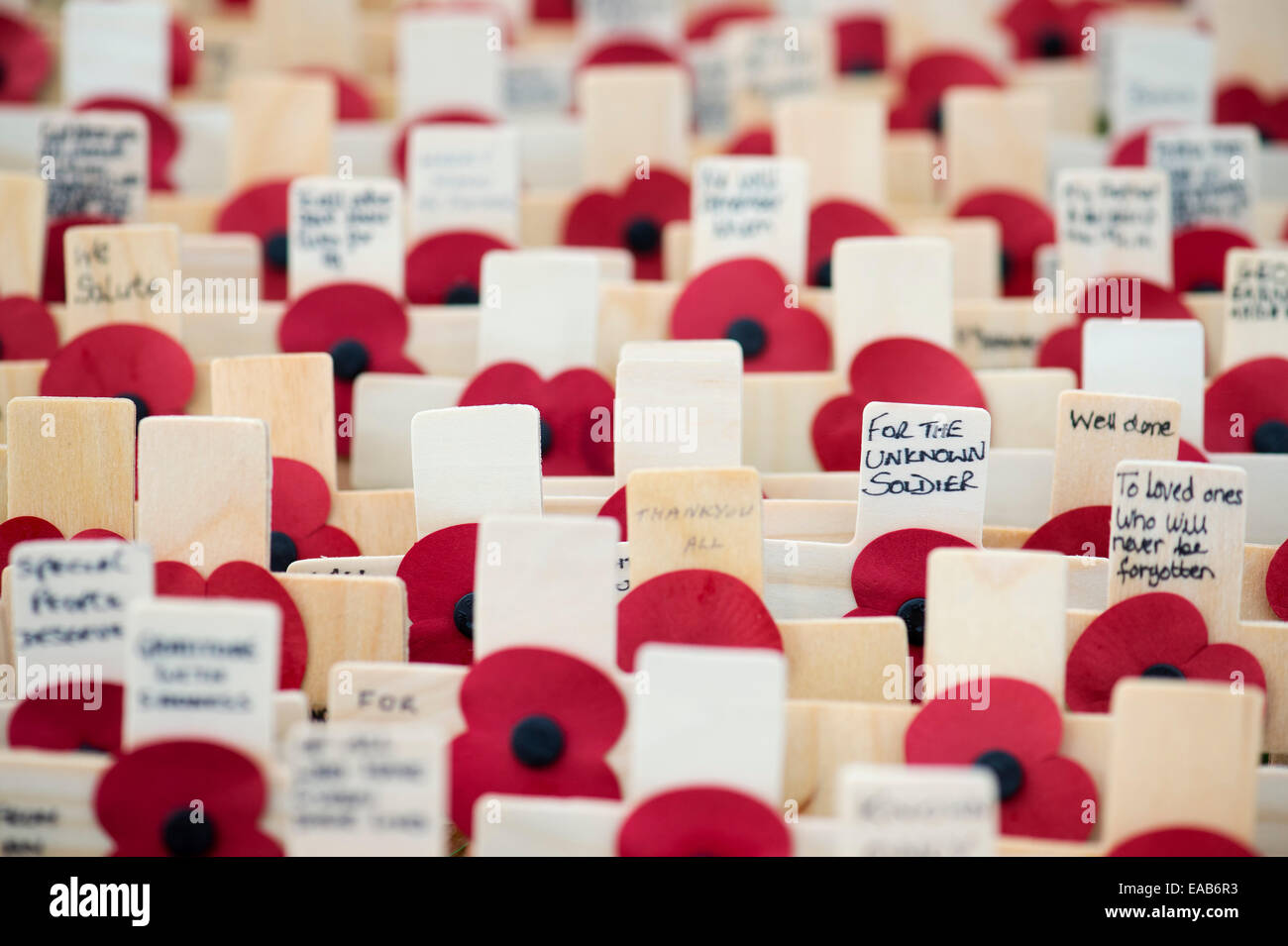 For The Unknown Soldier. Remembrance crosses and poppies - Stock Image