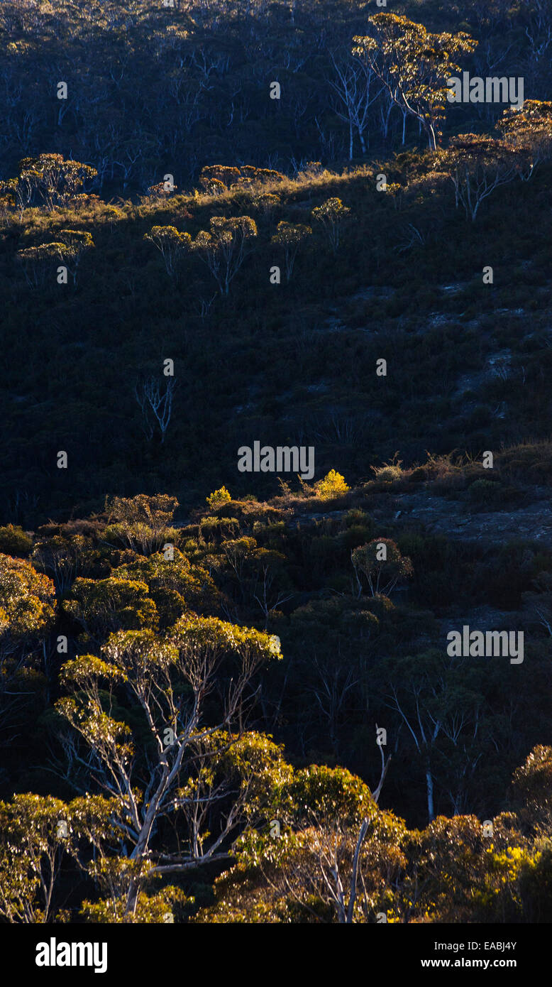 View of bushland in Blue Mountains National Park, NSW, Australia - Stock Image