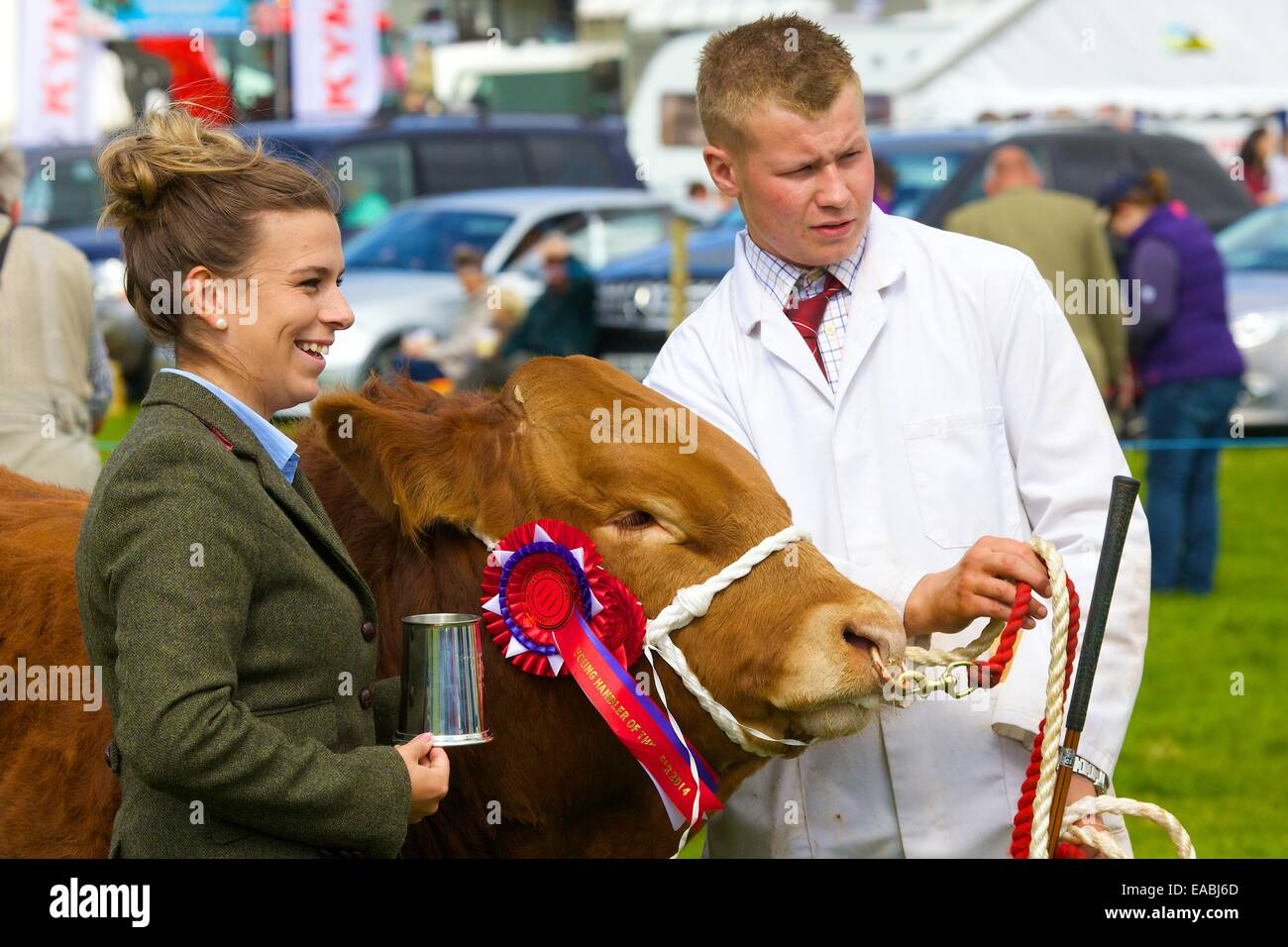 Young man showing bull with first prize rosette alongside female judge at Hesket Newmarket Agricultural Show, Hesket - Stock Image