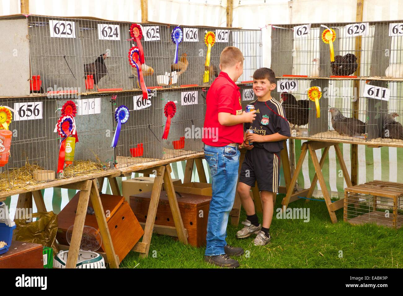 Boys joking by Show Chickens in cage at Hesket Newmarket Agricultural Show, Hesket Newmarket, Cumbria, England, - Stock Image
