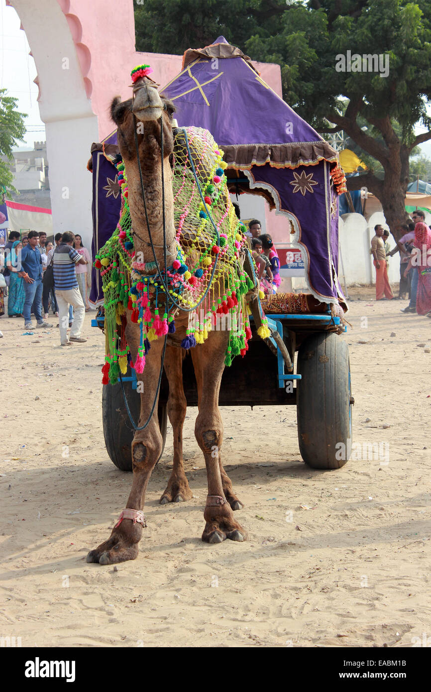 animal, camel, colors, creature, creatures, decorated, decoration, entertainment, event, events, fair, fairs, famous, - Stock Image